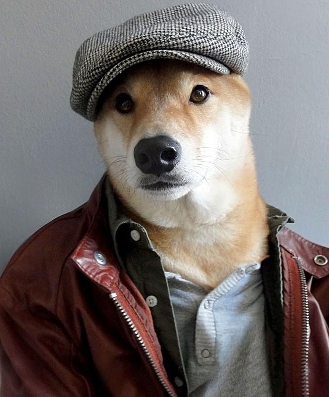 Если ваша собачка настоящая «стиляга»