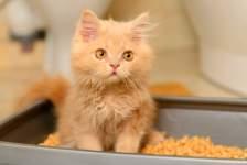 Кошачьи наполнители: плюсы и минусы каждого вида
